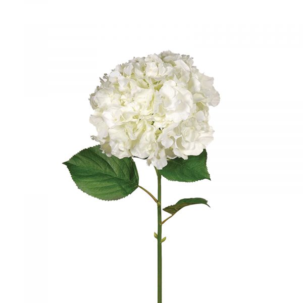 White Hydrangea Large