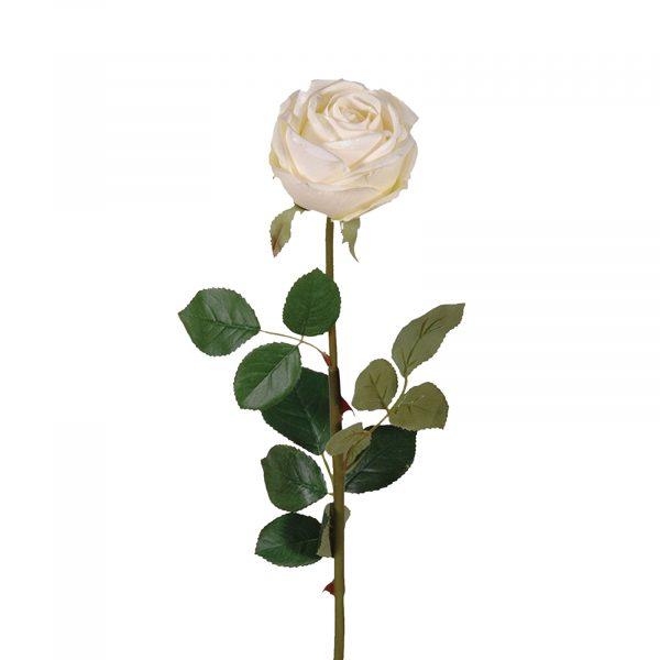 White Rose Vienna