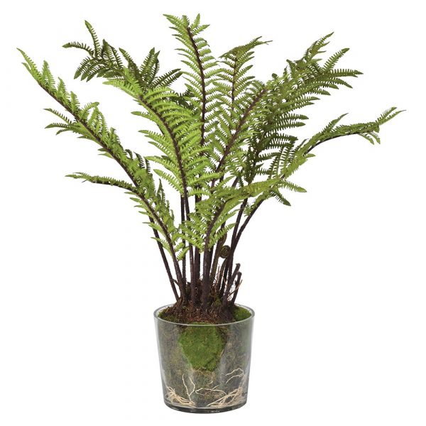 Green Tree Fern With Moss In Glass Pot
