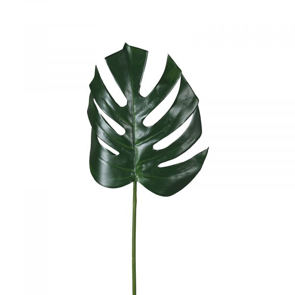 Green Leaf Stem
