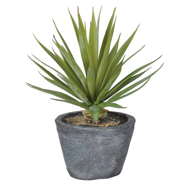 Green Air plant In Grey Pot