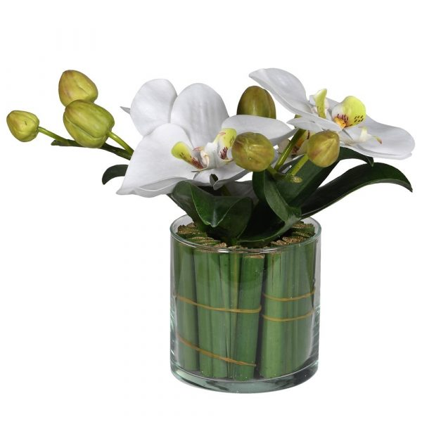 Small White Phalaenopsis Orchid In Glass With Greenery