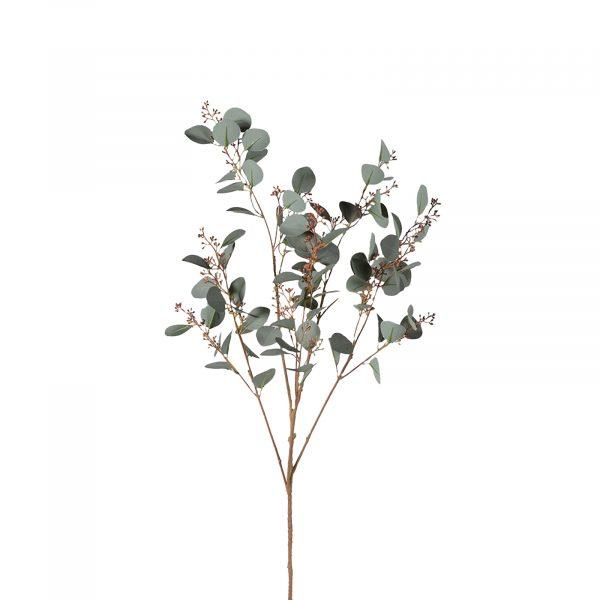 Natural Silver Dollar Eucalyptus With Seeds Spray