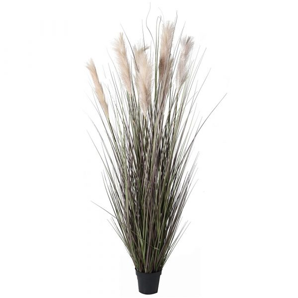 Large Onion Grass With Wheat Spray