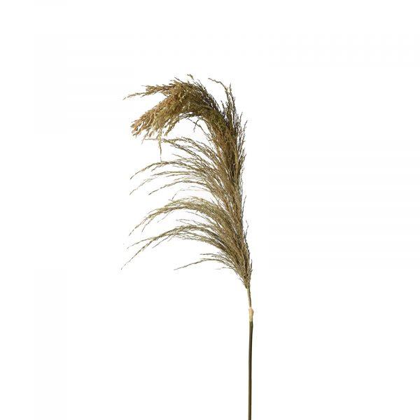 Real Dried Wheat Spray