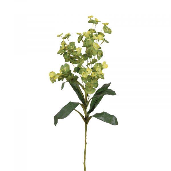 Green And Lime Euphorbia Spray