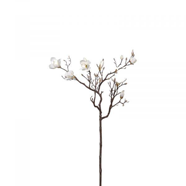 White Magnolia Tree Branch