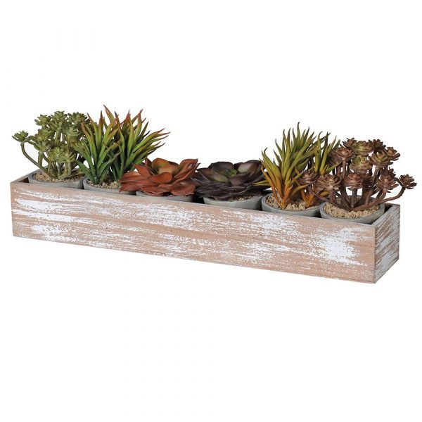 Set of 6 Assorted Succulents In Pots Displayed In Long Wooden Box