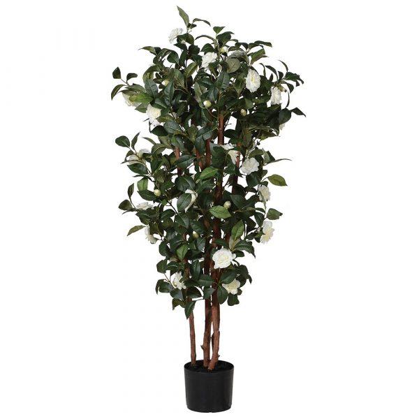 White Camellia Tree In Pot